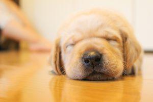 ペットに人気の犬の種類