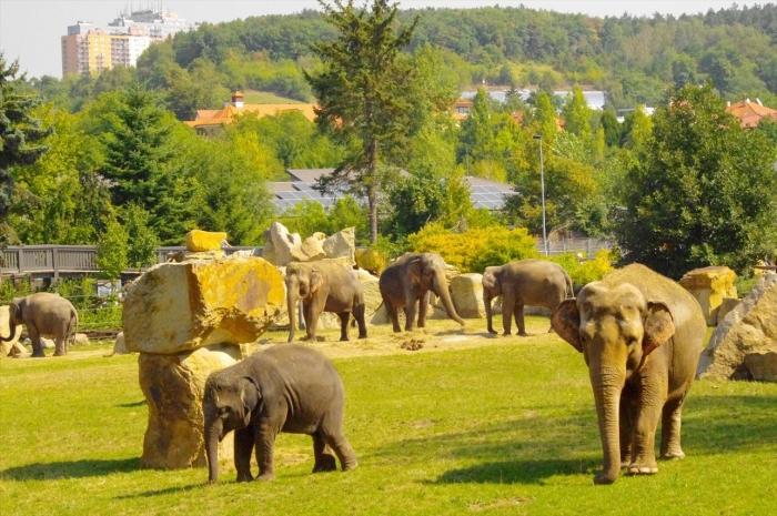 プラハ動物園