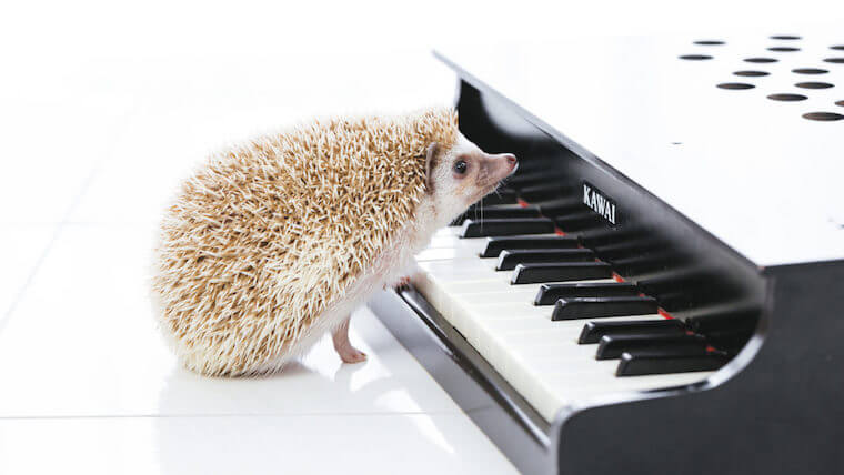 ジブリの眠れる曲7選!安眠できるピアノ・オルゴール動画もご紹介!
