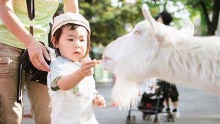 関西の人気動物園ランキング!