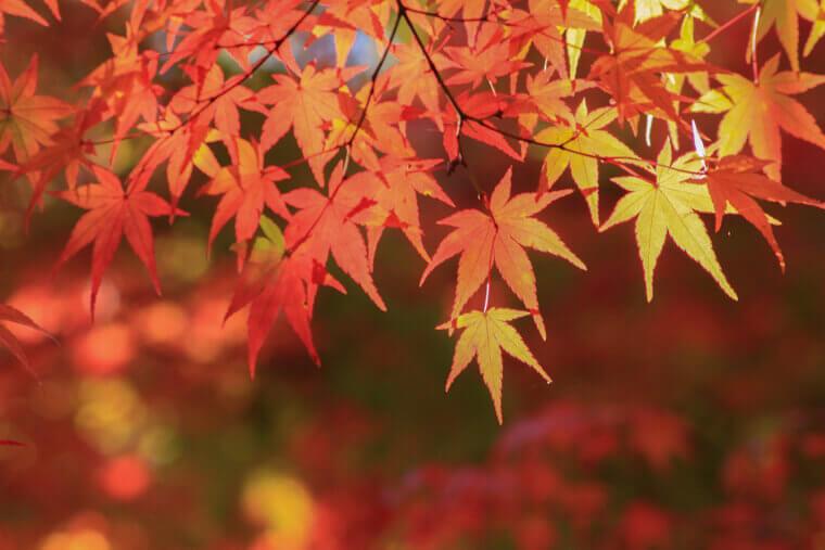 各地の紅葉時期とおすすめの紅葉スポット!(東北・関東・長野・京都・九州など)
